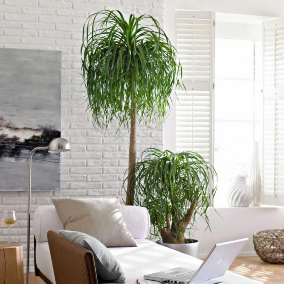 Wohnzimmer Pflanzen  100 Moderne Grosse Zimmerpflanzen Bilder Ideen