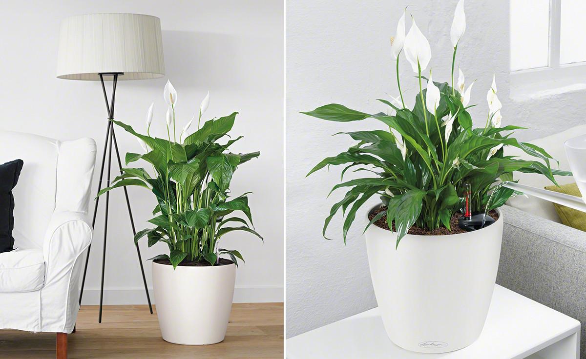 Wohnzimmer Pflanzen  Wohnzimmerambiente durch Pflanzen aufwerten