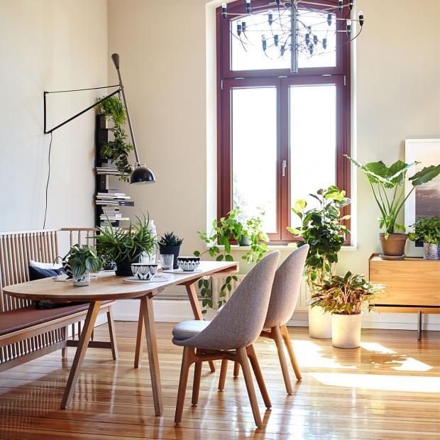 Wohnzimmer Pflanzen  Wohnen mit Pflanzen Bilder und Ideen [SCHÖNER WOHNEN]