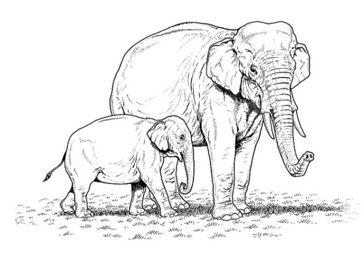 die 20 besten ideen für ausmalbilder elefant  beste