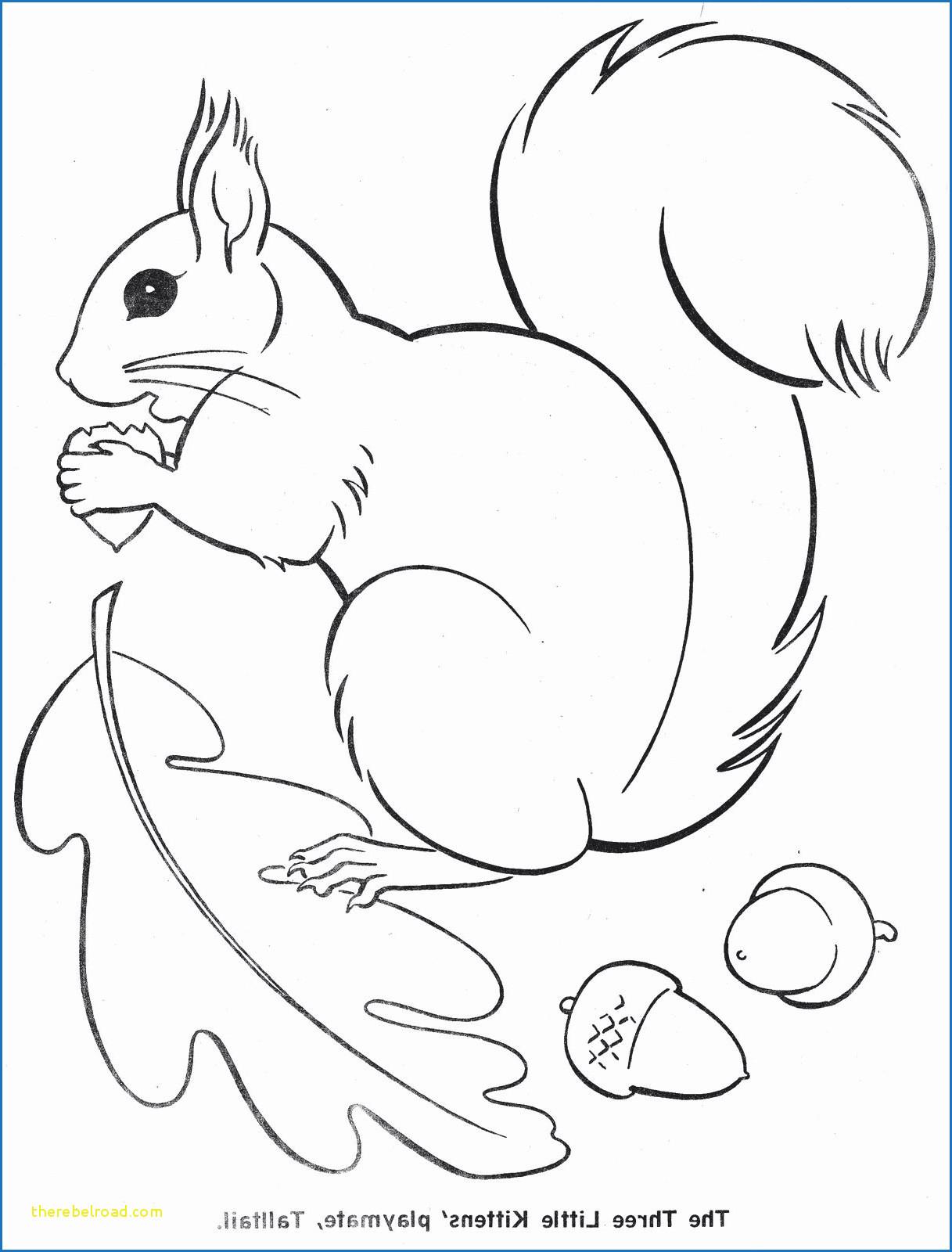 20 besten ideen ausmalbilder herbst eichhörnchen  beste