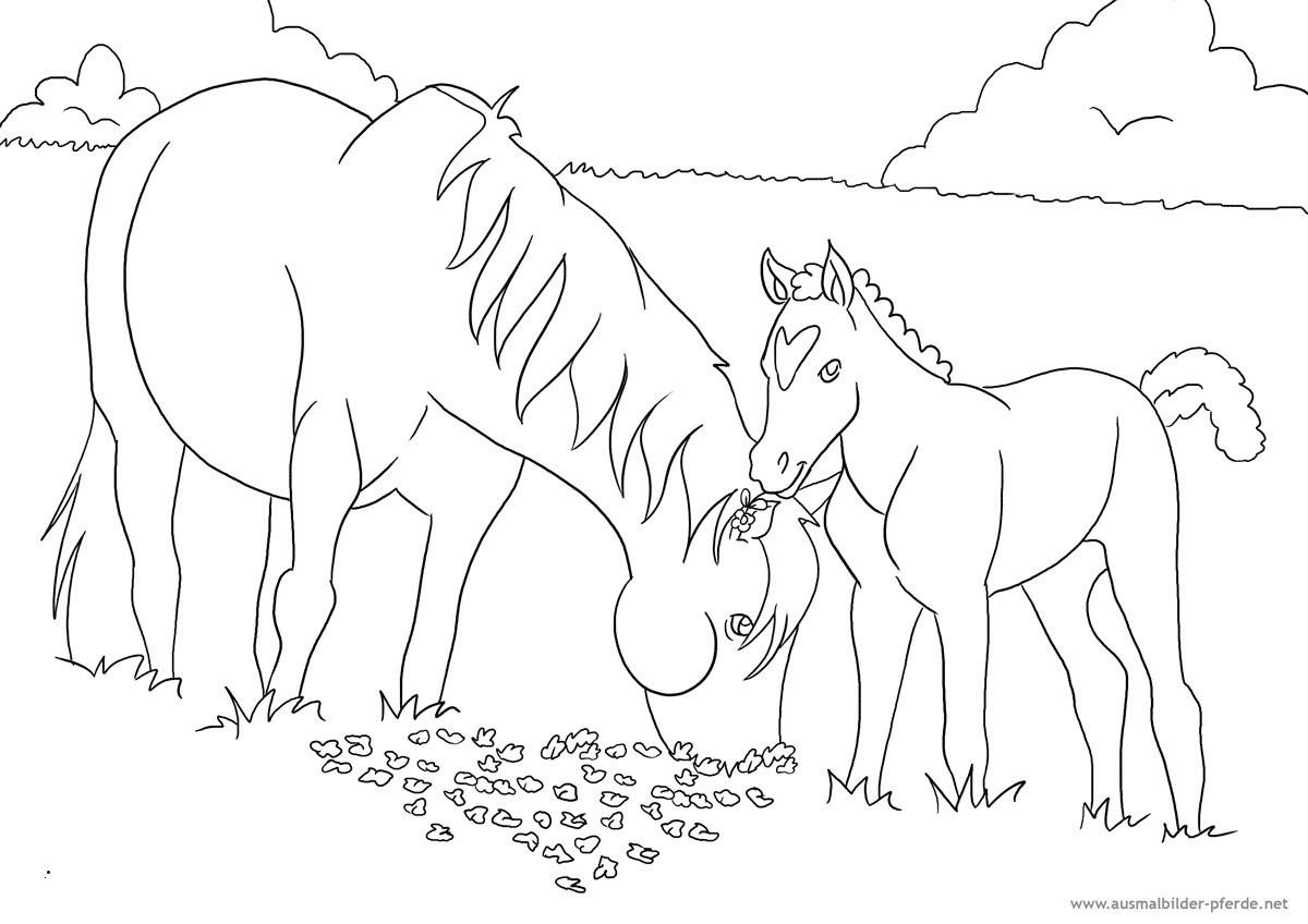 20 besten ausmalbilder kostenlos pferde  beste wohnkultur