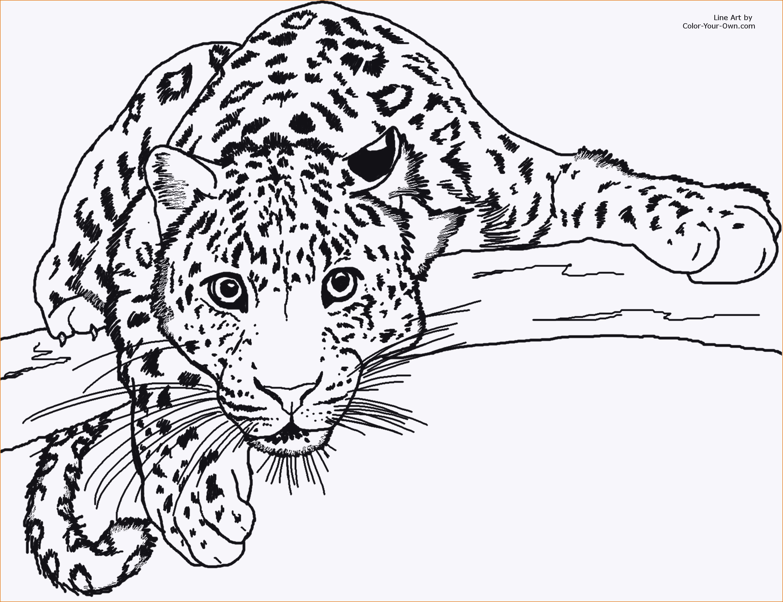 20 ideen für ausmalbilder leopard  beste wohnkultur