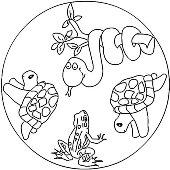 20 der besten ideen für ausmalbilder mandala tiere  beste