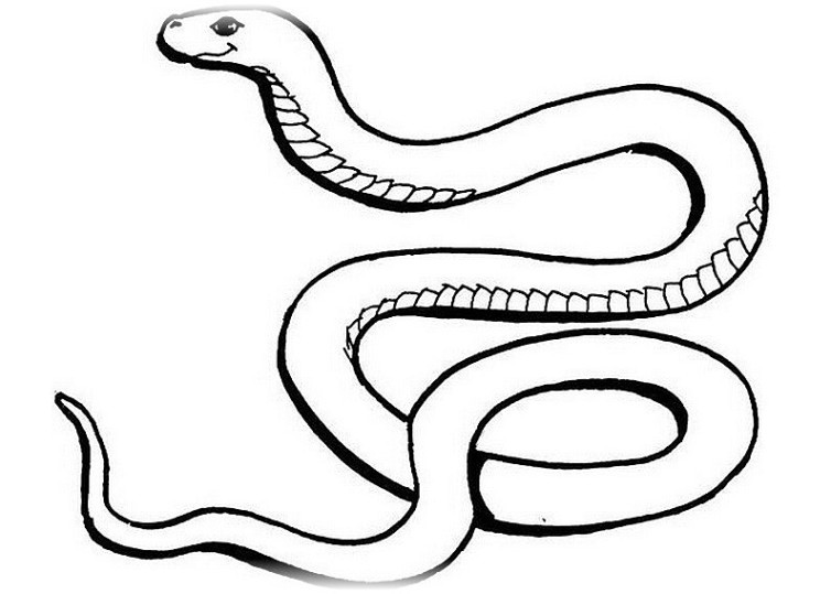 Die Besten Ausmalbilder Schlangen Beste Wohnkultur Bastelideen
