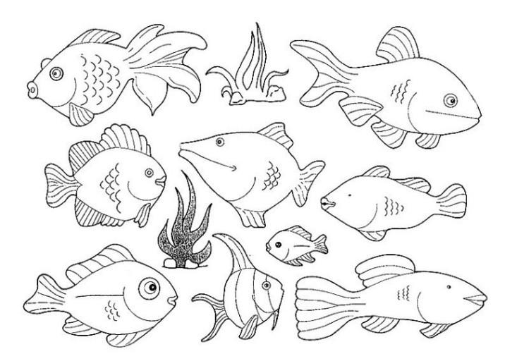 20 besten ausmalbilder unterwassertiere  beste wohnkultur