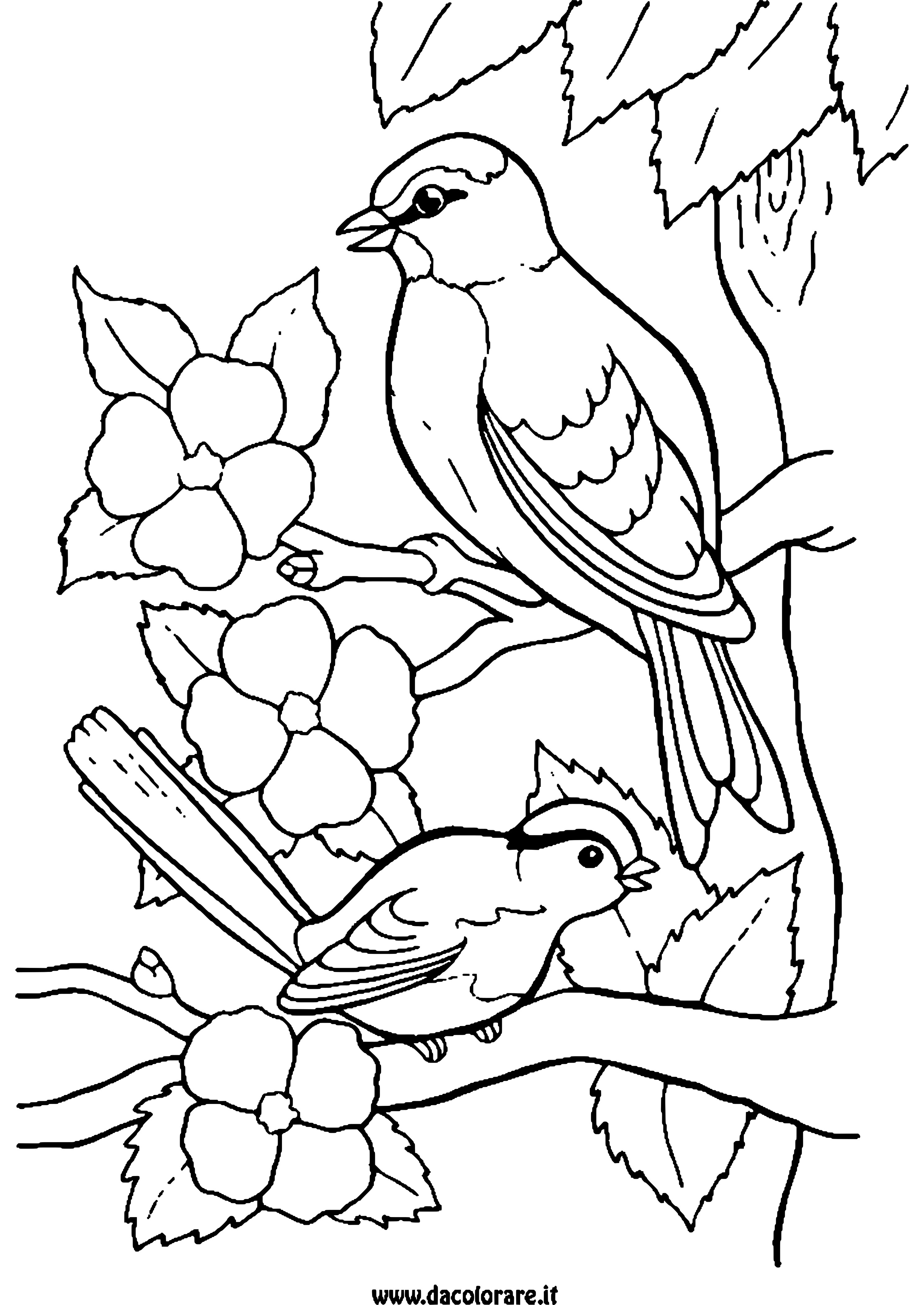 die besten ausmalbilder vögel im frühling  beste
