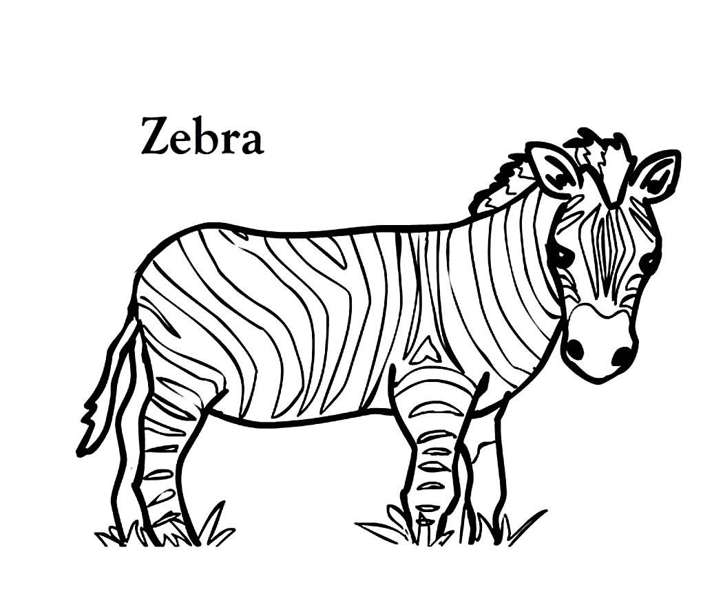 20 ideen für ausmalbilder zebra  beste wohnkultur