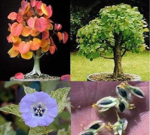 Besondere Geschenke Für Frauen  Duftpflanzen Set besondere ausgefallene Geschenke Düfte