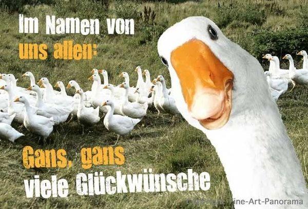 Bilder Geburtstagskarten  Lustige Tiere Bilder auf MemesBams Besten Witzige