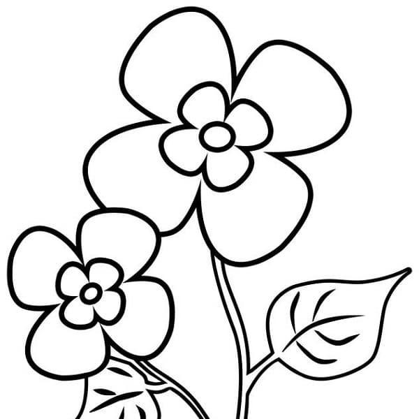 Blume Ausmalbilder  Blumen Malvorlagen