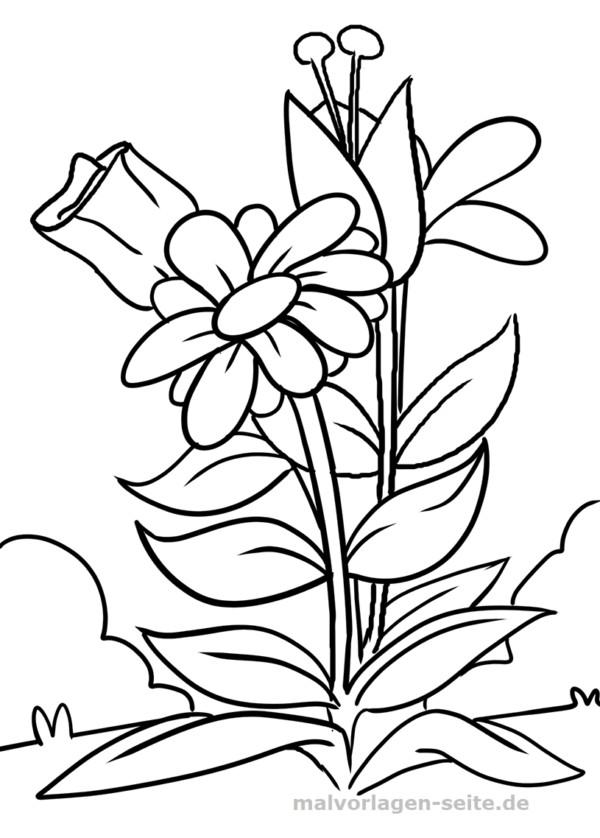 Blume Ausmalbilder  Malvorlage Blume Malvorlagen Ausmalbilder