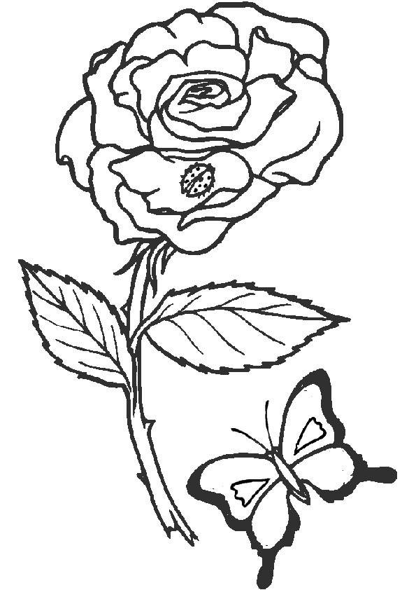 Blume Ausmalbilder  Ausmalbilder Blumen 2