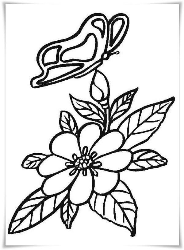 Blume Ausmalbilder  Ausmalbilder zum Ausdrucken Ausmalbilder Blumen