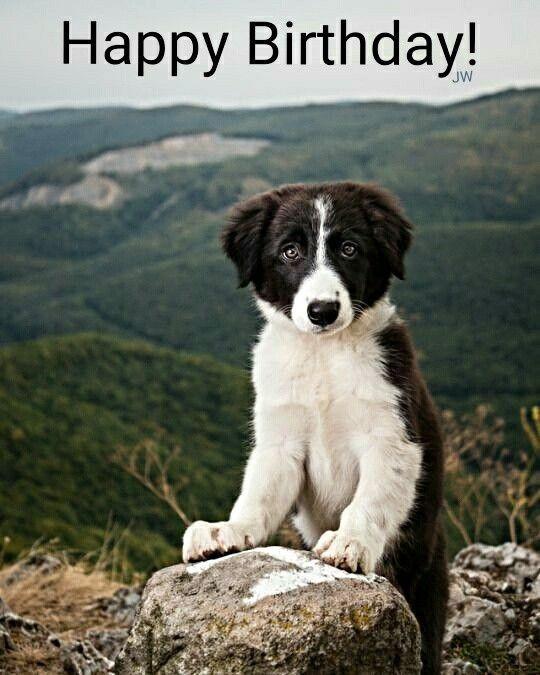 Geburtstagsbilder Hund  Geburtstagsbilder Hund