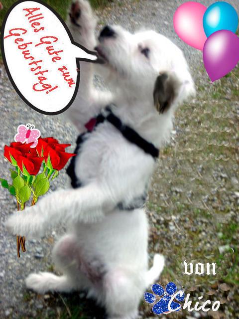 Geburtstagsbilder Hund  Glückwunsch Zum Geburtstag Hund