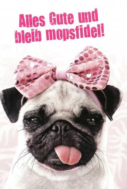 Geburtstagsbilder Hund  Die besten 25 Happy Birthday Ideen auf Pinterest