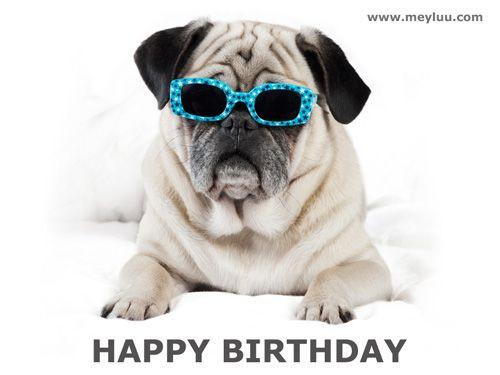 Geburtstagsbilder Hund  Geburtstagssprüche Bild Cooler Hund