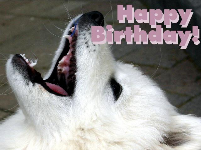 Geburtstagsbilder Hund  Kostenlose Grusskarte zum Geburtstag selbst ausdrucken