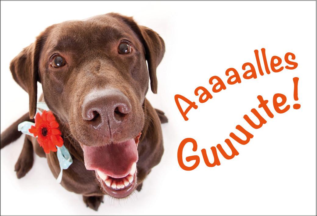 Geburtstagsbilder Hund  Magnet Kühlschrankmagnet Geburtstag Labrador Hund Alles