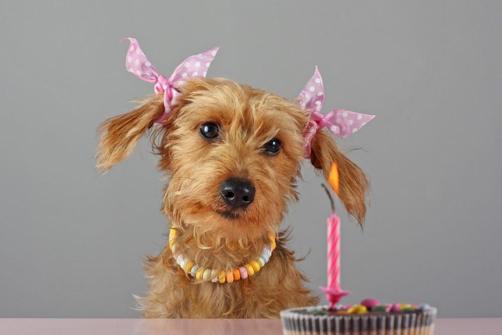 Geburtstagsbilder Hund  Ellis erster Geburtstag Foto & Bild