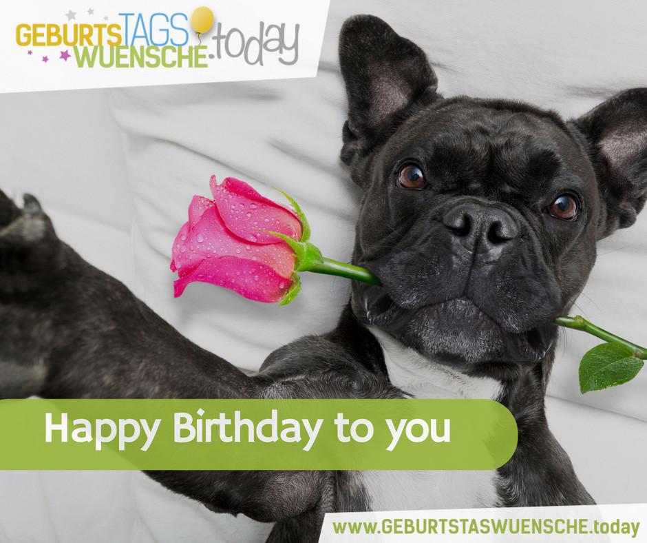 Geburtstagsbilder Hund  Geburtstagswünsche & Geburtstagsprüche Happy Birthday