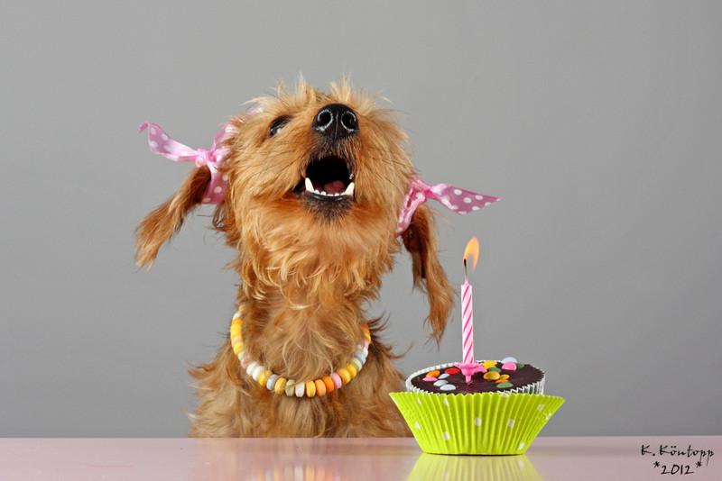 Geburtstagsbilder Hund  Ellis 1 Geburtstag