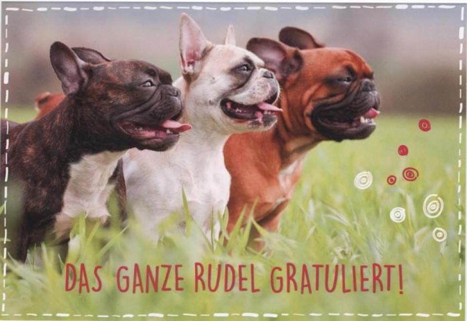 Geburtstagsbilder Hund  Glückwunschkarte