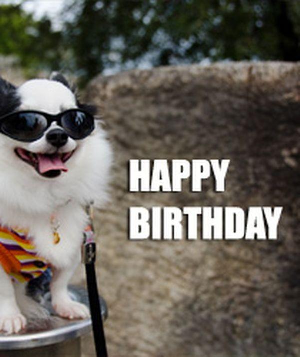 Geburtstagsbilder Hund  Lustige Tiere Bilder auf MemesBams Besten Witzige