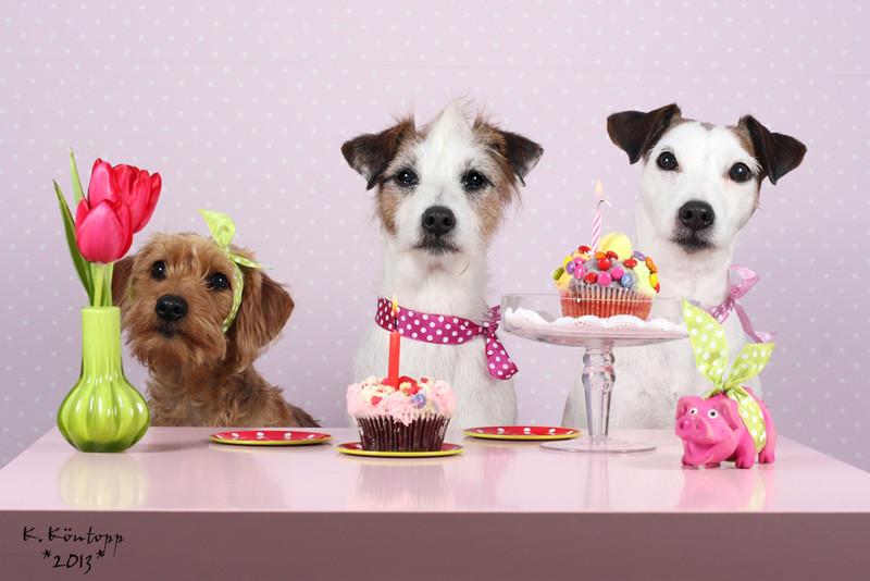 Geburtstagsbilder Hund  Mein liebster Nödelhund hat Geburtstag …
