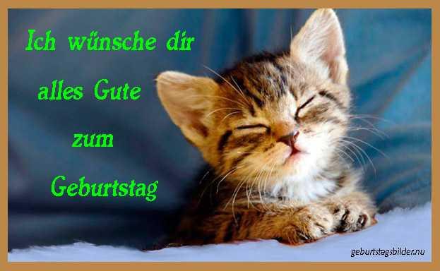 Geburtstagsbilder Katzen Kostenlos  Geburtstagsbilder