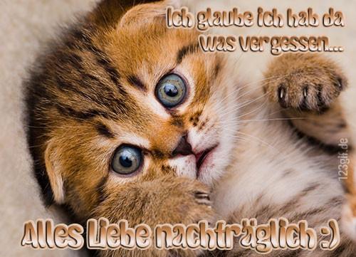 Geburtstagsbilder Katzen Kostenlos  Alles Gute nachträglich