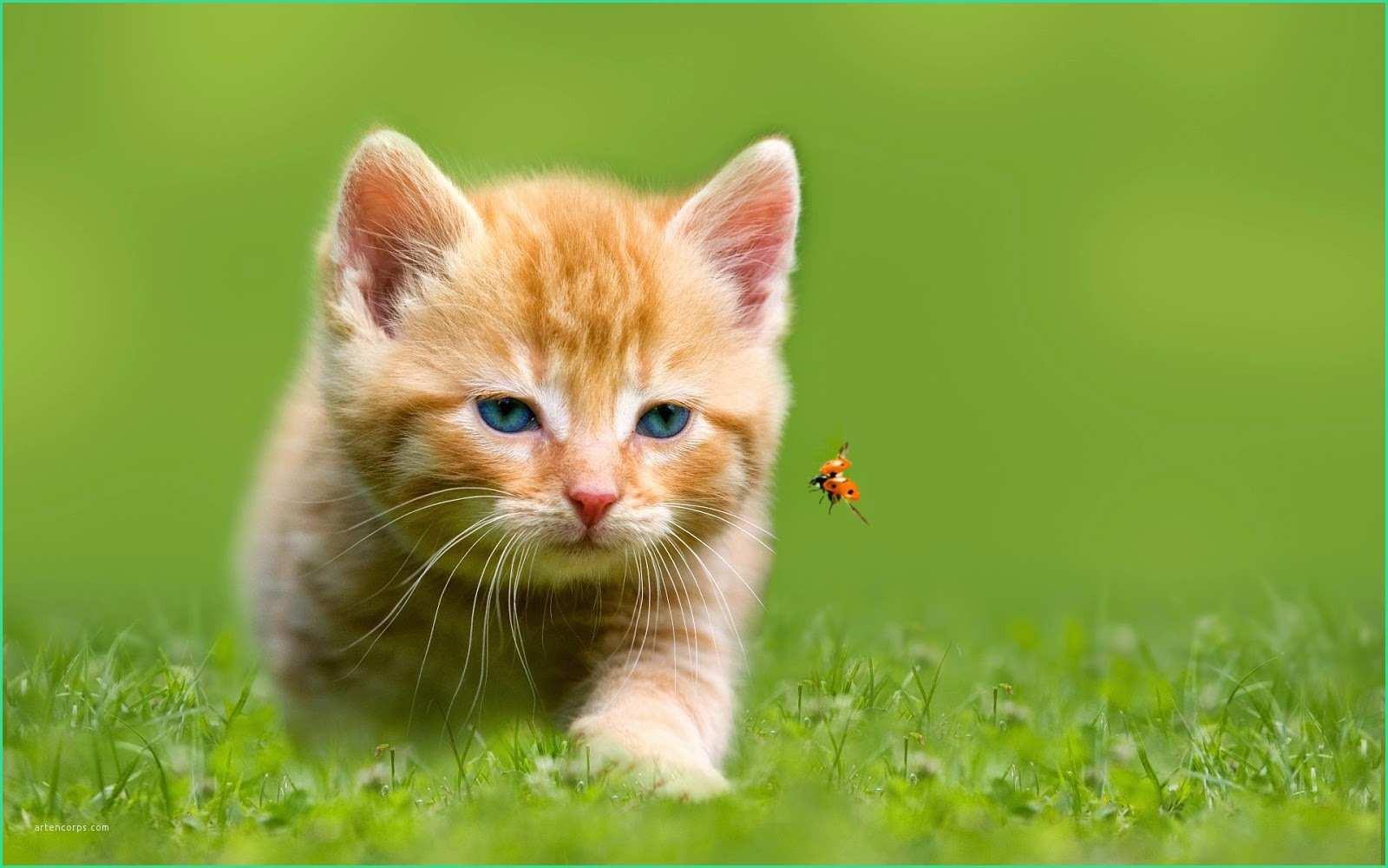 Geburtstagsbilder Katzen Kostenlos  Lustige Hintergrundbilder Kostenlos Handy Bewundernswert