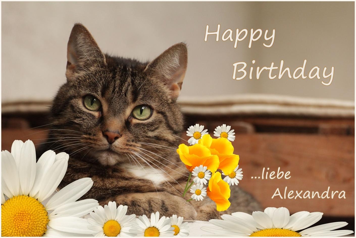 Geburtstagsbilder Katzen Kostenlos  Alexandra hat Geburtstag Foto & Bild