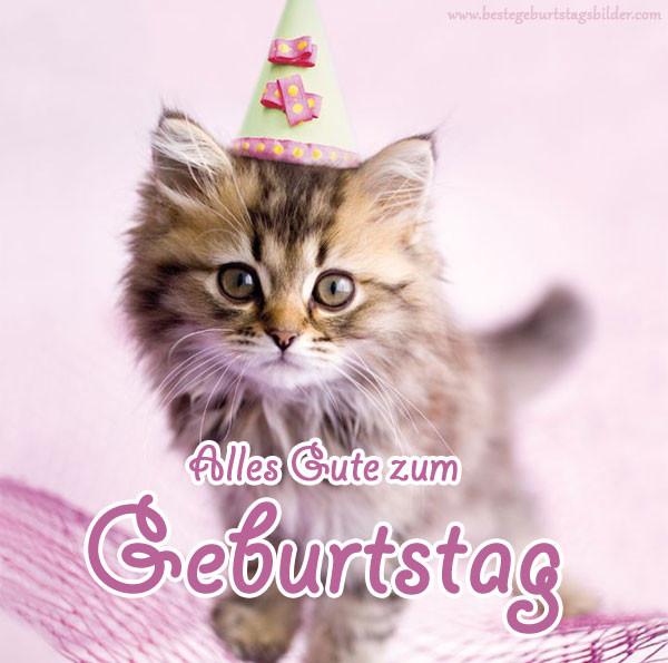 Geburtstagsbilder Katzen Kostenlos  Geburtstag katze 4 Happy Birthday World