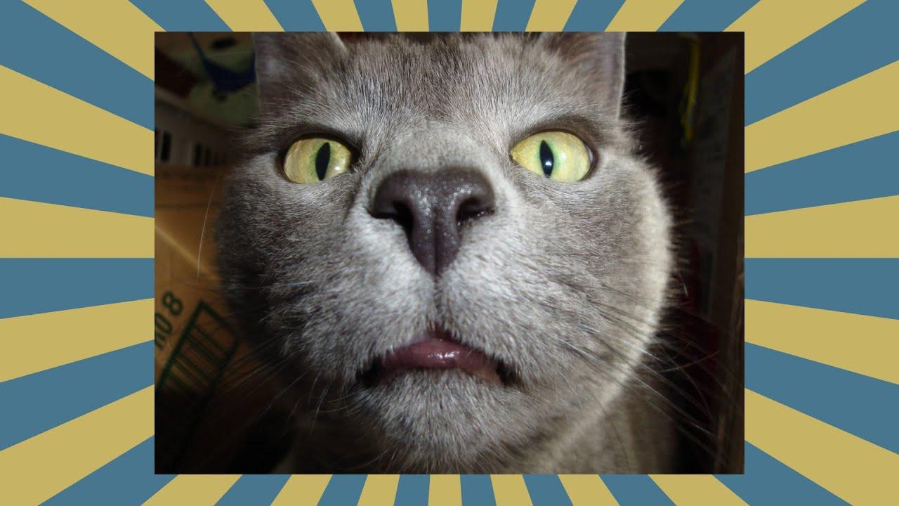 Geburtstagsbilder Katzen Kostenlos  LUSTiGE Katzen Bilder LUSTIGSTEN Katzen BESTE 2016