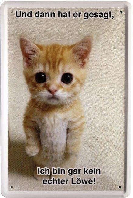 Geburtstagsbilder Katzen Kostenlos  Und dann hat er gesagt ich bin kein Löwe Katze 20 x 30