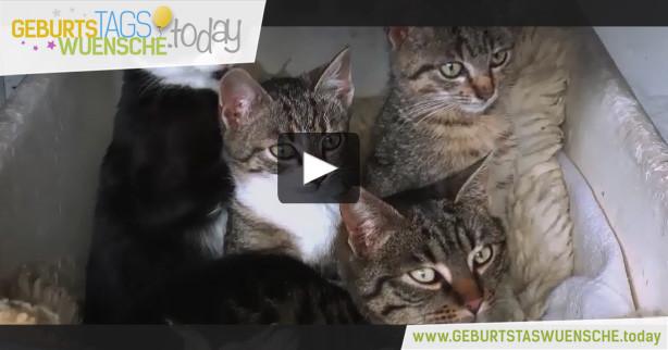Geburtstagswünsche Katzen  Geburtstagsglückwünsche mit Katzen und Geburtstagslied