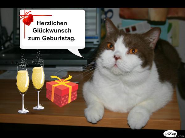 Geburtstagswünsche Katzen  Geburtstagsspruch Auf Italienisch
