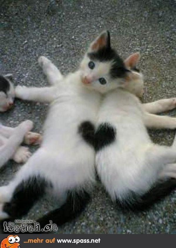 Geburtstagswünsche Katzen  Lustige Tiere Bilder auf MemesBams Besten Witzige