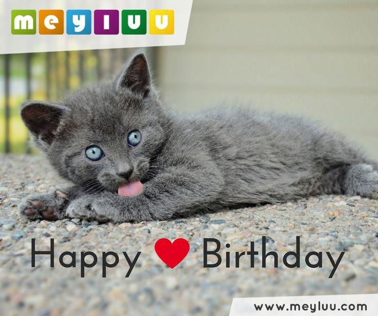 Geburtstagswünsche Katzen  138 besten Geburtstagsgrüße Glückwünsche zum Geburtstag