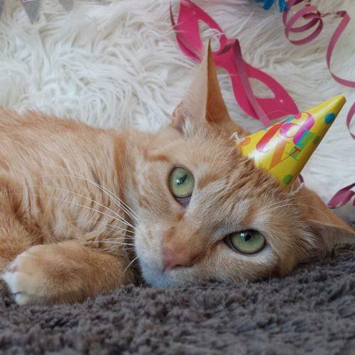 """Geburtstagswünsche Katzen  74 besten Happy """"Purrthday"""" Kitty Bilder auf"""
