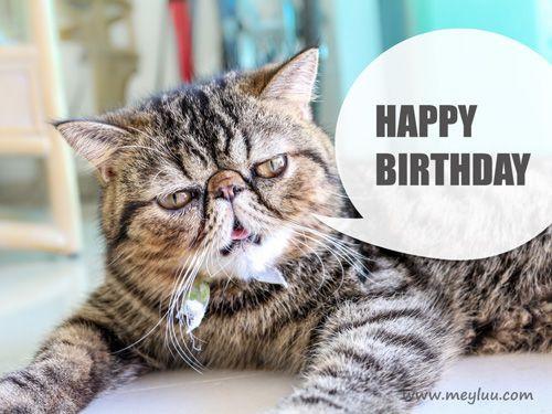 Geburtstagswünsche Katzen  Lustige Geburtstagsgrüße Bild lustige Katze