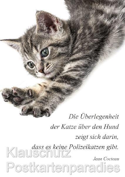 Geburtstagswünsche Katzen  Sprüche Zum Geburtstag Katzen Lustige