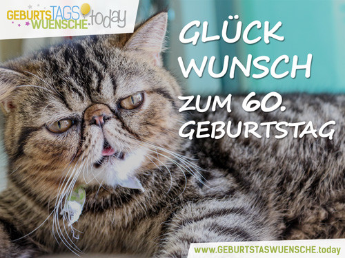 Geburtstagswünsche Katzen  Lustige Sprüche & schöne Glückwünsche zum 60 Geburtstag