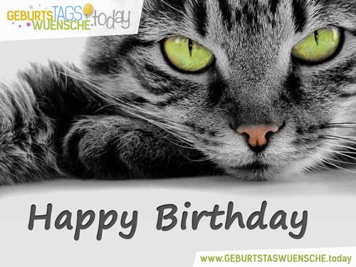 """Geburtstagswünsche Katzen  Geburtstagsgrüße – schönes Bild """"Süße Katze"""""""