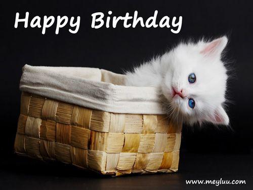 Geburtstagswünsche Katzen  Glückwünsche zum Geburtstag Bild Katze im Körbchen