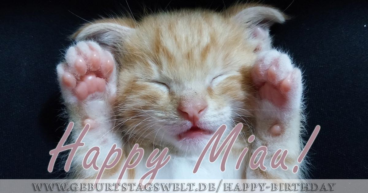Katzen Geburtstagsbilder  Happy Birthday Bilder Tolle Bilder zum Gratulieren