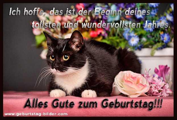 Katzen Geburtstagsbilder  Geburtstagsbilder Katze 3