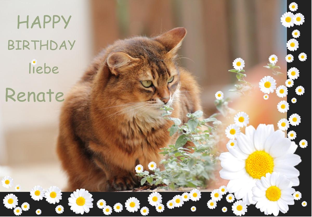 Katzen Geburtstagsbilder  nachträglich Foto & Bild